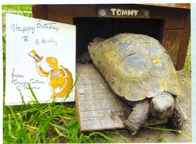 Watford old stock runs out - a tale of Tommy Tortoise.