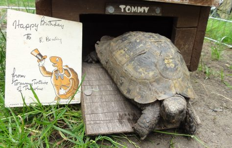 Tommy Tortoise - the real thing.