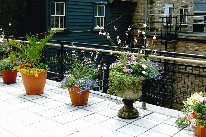 Robert Sayle roof garden at St Andrew's Street