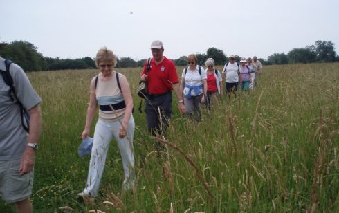 Robert Sayle Rambling Club walking through a meadow on the way to Madingley.