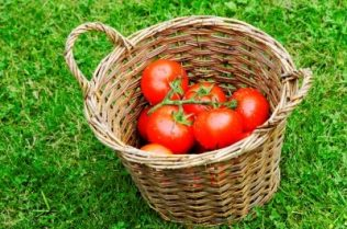 tomatoes in a bamboo basket | Image courtesy of Dan / FreeDigitalPhotos.net