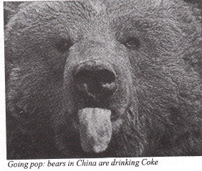 Bears find fizzy drinks the real thing