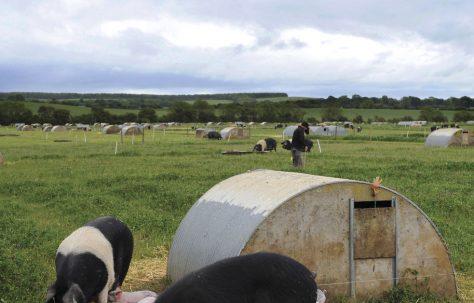 Helping  British Farmers